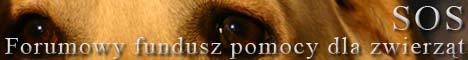 Forum poświęcone psom rasy Labrador Retriever